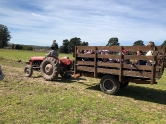 Día de granja a pleno sol
